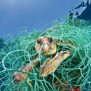 impacto-basura-marina-naturaleza
